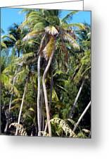 Shy Palms Greeting Card