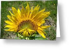 Shy Sunflower Greeting Card