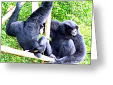 Siamang Gibbons Greeting Card