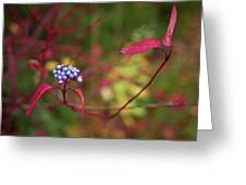 Siberian Dogwood Greeting Card