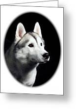 Siberian Husky 271 Greeting Card