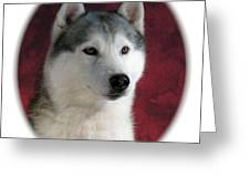 Siberian Husky 899 Greeting Card