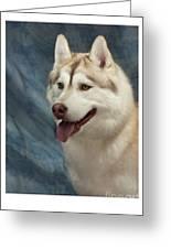 Siberian Husky 954 Greeting Card