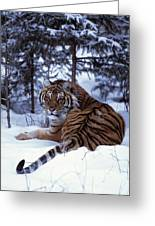 Siberian Tiger Lying On Mound Of Snow Greeting Card