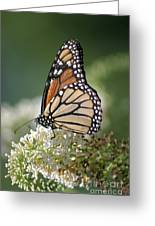 Side Profile Of A Monarch Greeting Card