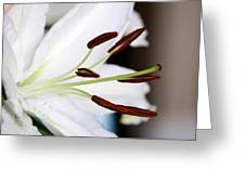 Side View Of A Lily 2 Greeting Card