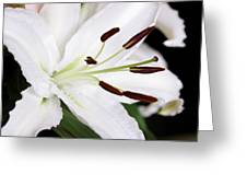 Side View Of A Lily 3 Greeting Card