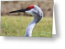 Sideways Sandhill Crane Greeting Card