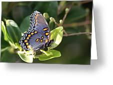 Sideways Greeting Card
