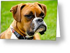 Sidney The Boxer Greeting Card