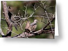 Siesta Time - Mourning Dove Greeting Card