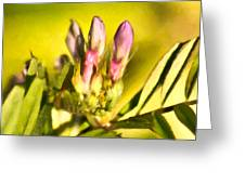 Sign Of Spring Greeting Card