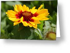 Signs Of Summer Greeting Card