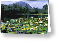 Silent Valley, Mourne Mountains Greeting Card