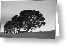 Silhouette Of A Tree With Sheep Greeting Card