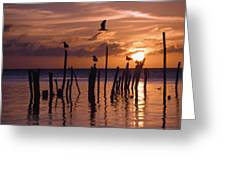 Silhouette Of Seagulls On Posts In Sea Greeting Card