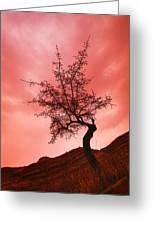 Silhouette Of Shrub Tree Greeting Card
