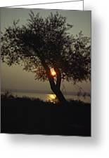 Silhouette Of Willow Tree At Sunset Greeting Card