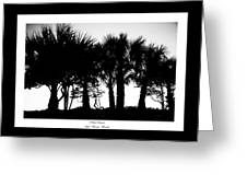Silhouette Palm Sunset Greeting Card