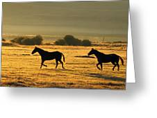 Silhouetted Horses Running Greeting Card