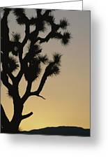 Silhouetted Joshua Tree In Antelope Greeting Card
