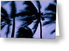 Silhouetted Palm Trees Blow In The Wind Greeting Card