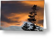 Silhouetted Tree At Sunset Greeting Card