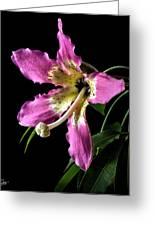 Silk Flower Greeting Card