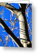 Silk Tree Greeting Card