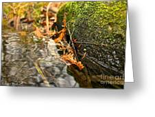 Silky Water Greeting Card