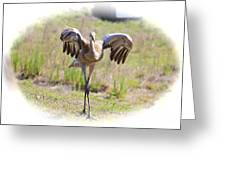 Silly Sandhill Crane Chick Greeting Card