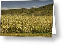 Silo Panorama Greeting Card