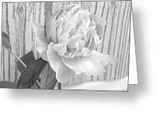 Silver Beauty Greeting Card