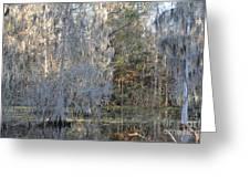 Silver Cypress Greeting Card