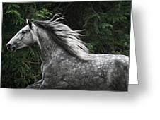 Silver Dapple Greeting Card