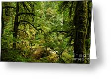 Silver Falls Rainforest Greeting Card