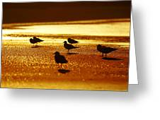 Silver Gulls On Golden Beach Greeting Card