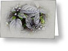Silver Leaves And Berries Greeting Card