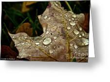 Silver Maple Rain Greeting Card