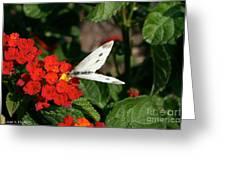 Silver Moth Greeting Card