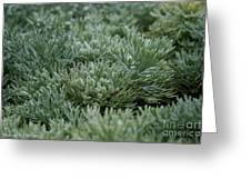 Silver Mound Dew Drenched Greeting Card