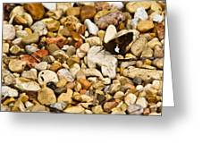 Silver Spotted Skipper 1 Greeting Card