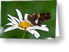 Silver Spotted Skipper 2 Greeting Card