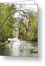 Silver Springs River In The Rain 2 Greeting Card