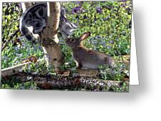Silver Tabby And Wild Rabbit Greeting Card