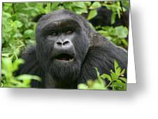 Silverback Portrait Greeting Card