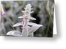 Silvery Garden Greeting Card