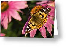 Simple Butterfly Greeting Card