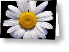 Simply A Daisy Greeting Card