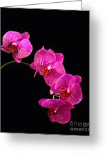 Simply Beautiful Purple Orchids Greeting Card